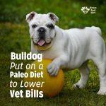 Bulldog Put on a Paleo Diet to Lower Vet Bills