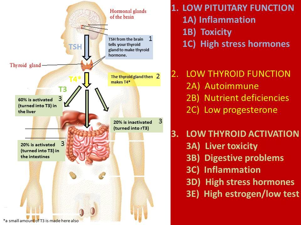 Dr. Justin's thyroid slide