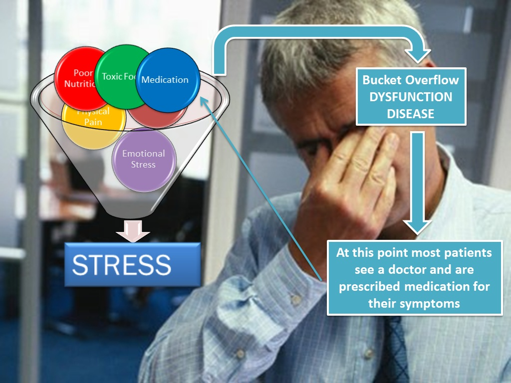 The-stress-cycle