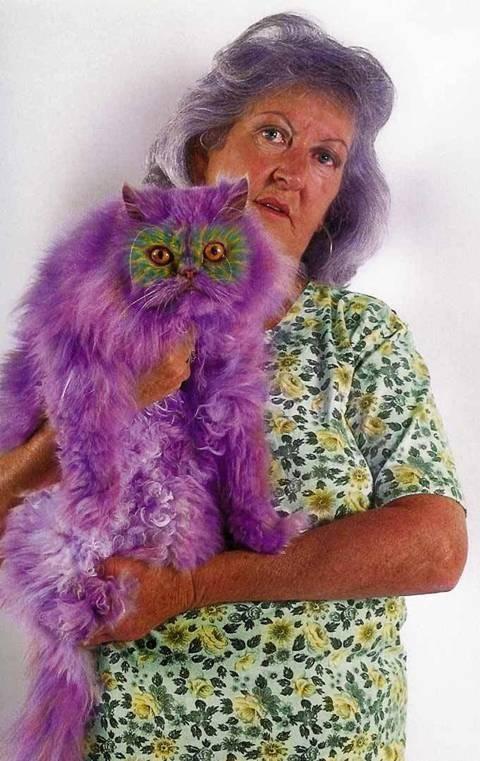 painted_cats_purple_cat_What_is_your_favorite_colour_Challenge-s480x761-230164-565-external