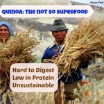 Quinoa: The Not So Superfood (low in protein, unsustainable, inflammatory and hard to digest)