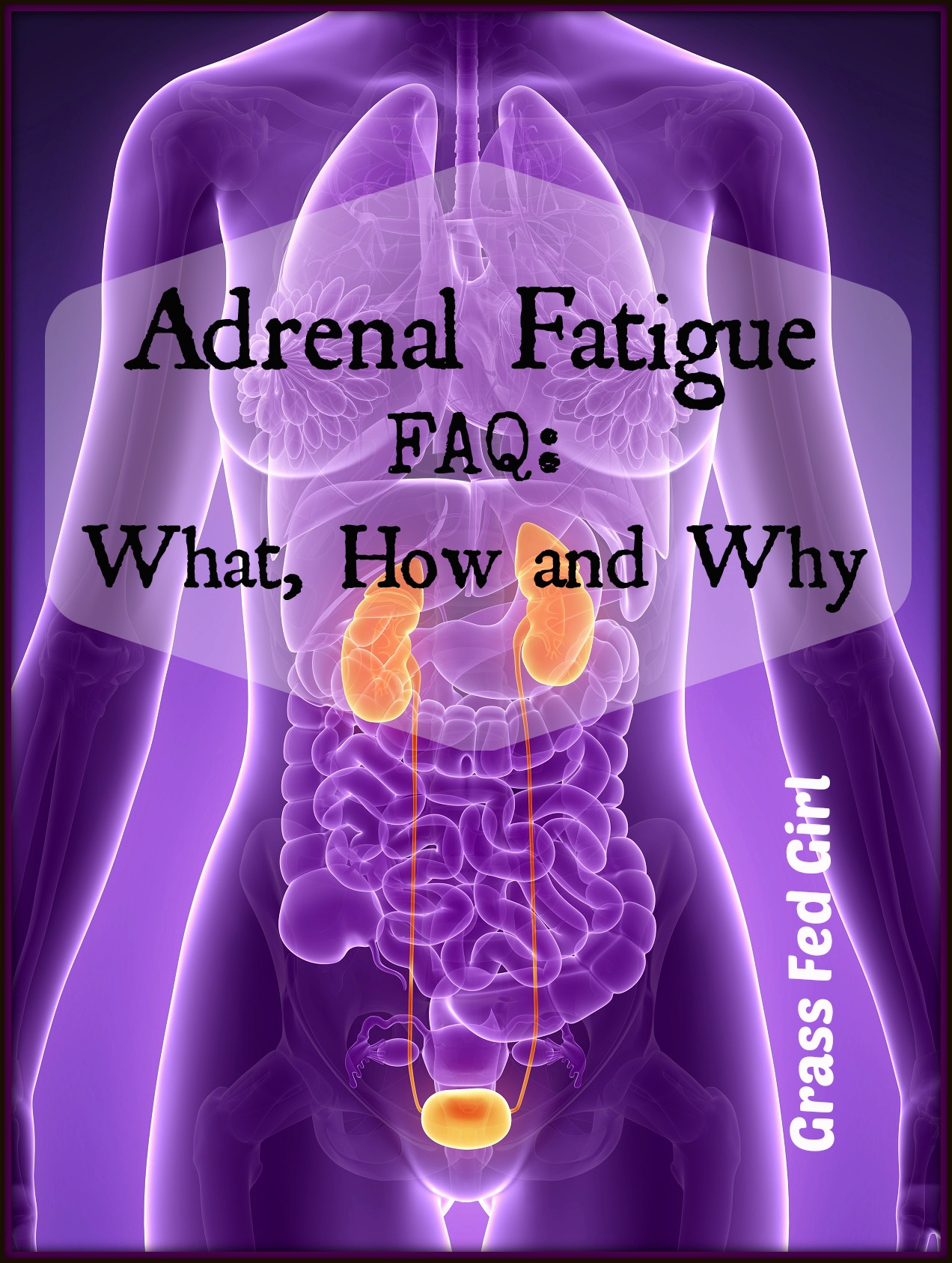 adrenal fatigue1242x1656.1